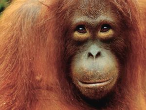 How we launched a new spread and helped orangutans at the same time.